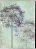 Allium Globe Master Fine-Art Print