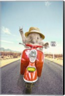 Hedgehog Traveler Fine-Art Print