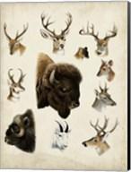 Western Animal Species I Fine-Art Print