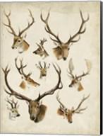 Western Animal Species II Fine-Art Print
