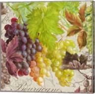 Vintage Fruits II Grapes Fine-Art Print