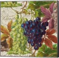 Vintage Fruits III Grapes Fine-Art Print
