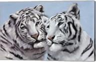 Loving White Tigers Fine-Art Print