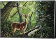 Forest Wonder Fine-Art Print