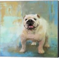 White English Bulldog Fine-Art Print