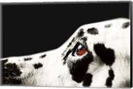 The Amber Eye of Dalmatian Dog Fine-Art Print