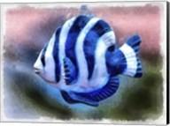 A Single Angel Fish Fine-Art Print