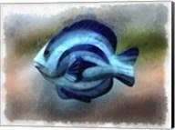 Another Single Angel Fish Fine-Art Print