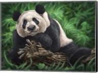 Peaceful Panda Fine-Art Print