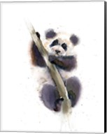 Pandy Fine-Art Print