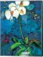 Phalaenopsis I Fine-Art Print