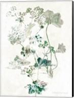 Geranium Botanical Fine-Art Print