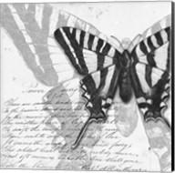 Butterflies Studies II Fine-Art Print