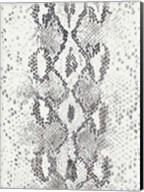 Snake Skin Fine-Art Print