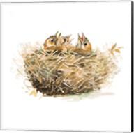 The Nest Fine-Art Print