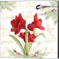 Merry Amaryllis I Fine-Art Print