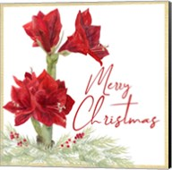 Merry Amaryllis VI Fine-Art Print