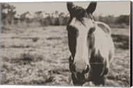 Friendly Horse Fine-Art Print