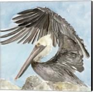 Soft Brown Pelican II Fine-Art Print