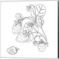 Wild Strawberries I Fine-Art Print