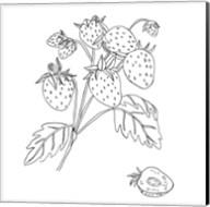 Wild Strawberries II Fine-Art Print