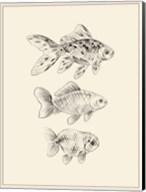 Goldfish I Fine-Art Print