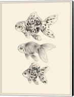 Goldfish II Fine-Art Print