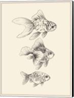 Goldfish III Fine-Art Print