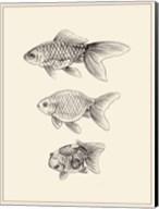 Goldfish IV Fine-Art Print