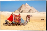 Camel Resting by the Pyramids, Giza, Egypt Fine-Art Print