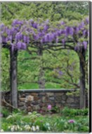 Wisteria In Full Bloom On Trellis Chanticleer Garden, Pennsylvania Fine-Art Print