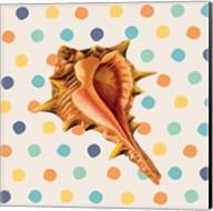 Confetti Shell IV Fine-Art Print
