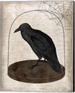 Raven Jar Fine-Art Print