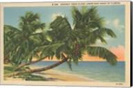 Florida Postcard III Fine-Art Print