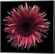 Floral Majesty IX Fine-Art Print