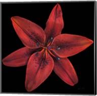Floral Majesty VIII Fine-Art Print