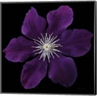 Floral Majesty VII Fine-Art Print