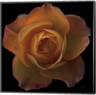 Floral Majesty V Fine-Art Print