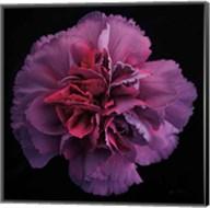 Floral Majesty IV Fine-Art Print