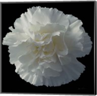 Floral Majesty III Fine-Art Print