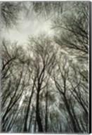 Light through the Trees Fine-Art Print