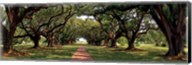 Enchanted Oaks Fine-Art Print