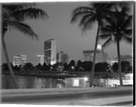 Night View Skyline With Palm Trees Miami Florida Fine-Art Print