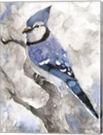 Blue Jay 2 Fine-Art Print