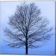 November Tree Fine-Art Print