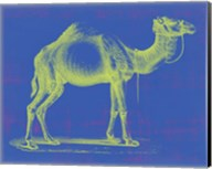 Safari Pop III Fine-Art Print