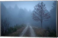 Spring Fog Fine-Art Print