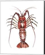 Spiny Lobster Fine-Art Print