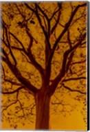 Orange Glow Fine-Art Print