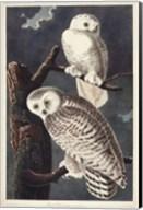 Pl 121 Snowy Owl Fine-Art Print